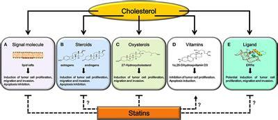 Frontiers | Cholesterol and Its Metabolites in Tumor