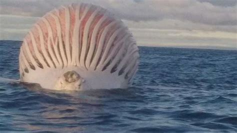 What The Heck Was This Smelly Pink Blob Floating In The