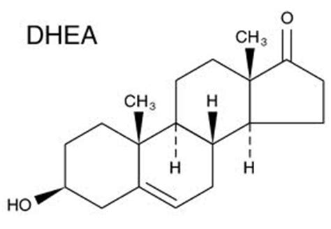 What are the benefits of DHEA? - Supplement Reviews Blog