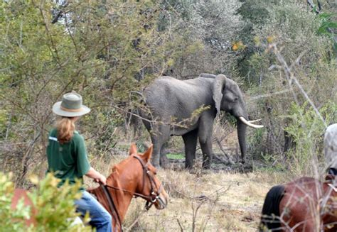 Victoria Falls Activities - What you can do in Victoria
