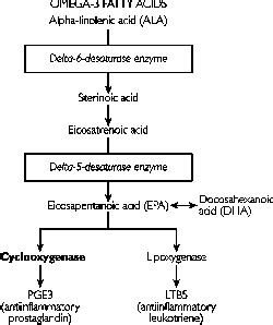 Cyclooxygenases   definition of cyclooxygenases by Medical