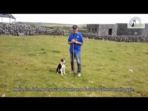 Cliffs of Moher & Bunratty Castle & Burren & Ailwee Cave